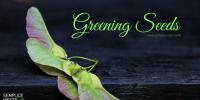 Greening Seeds