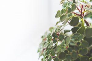 houseplants-791120_1920